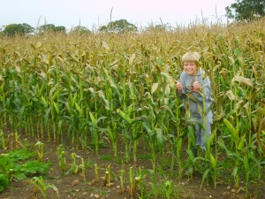 Robert, aged 8, standing amongst the maize before it is harvested